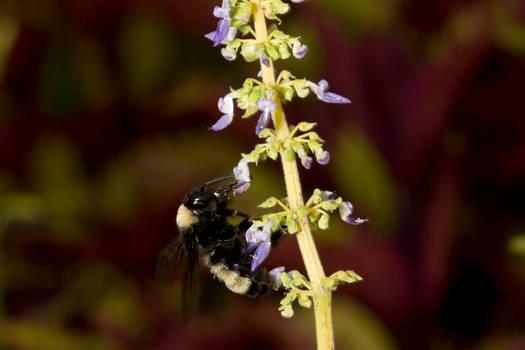 Bee on Flower 8