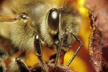 Honey Bee Tongue by Apophis906