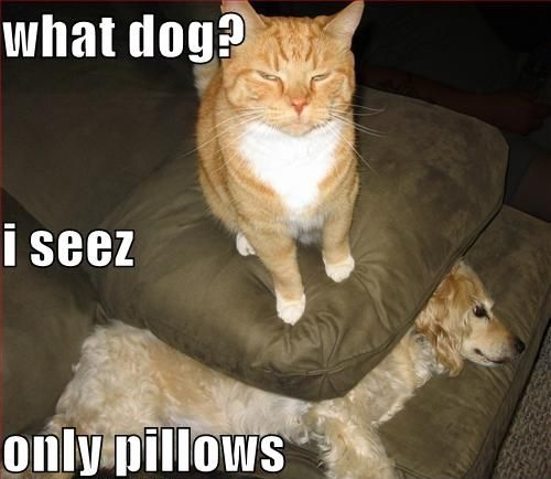 cat_vs_dog_by_candyboy123-d6d9wic.jpg