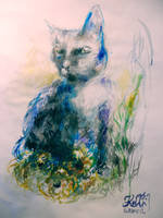 Cat by Keltu