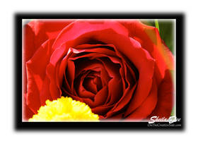 A Rose By Any Other Name by SheilaDee