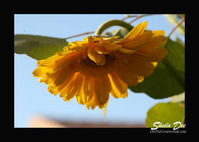 Sunnyside Up by SheilaDee