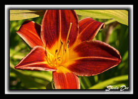 California Flower by SheilaDee
