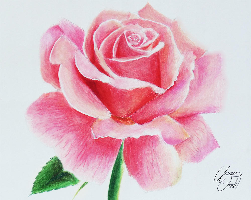 Drawing Flowers 1 A Rose By F a d i l On DeviantArt