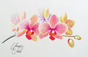 Orchids - Colored pencils by f-a-d-i-l