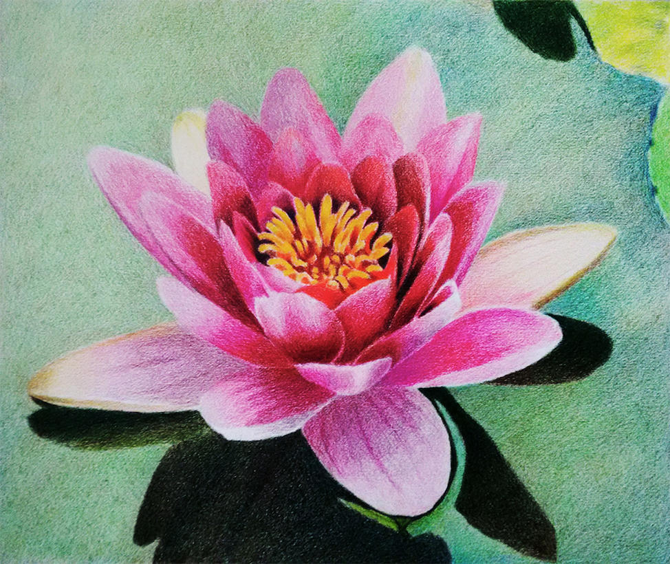 Water lily prismacolor colored pencil layering by f a d i l on water lily prismacolor colored pencil layering by f a d i l izmirmasajfo