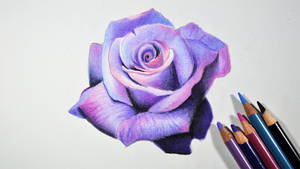 Lavender Rose -- Prismacolor pencils