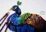Peacock -- Derwent Coloursoft pencils