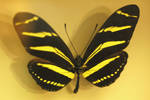 And Butterflys are free to fly by Blue-Sun-Jewelers