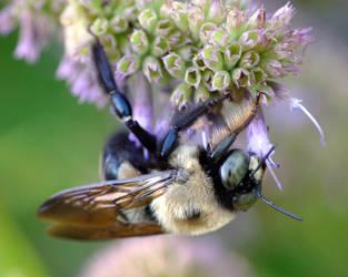 Bumblebee 4 by Blue-Sun-Jewelers