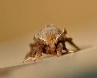Moth by Blue-Sun-Jewelers