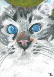 Blue Eyes by safija36