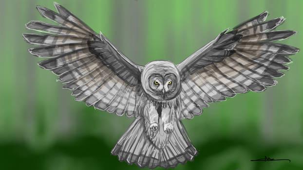 252 - Owl