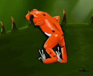 356 - Red Frog