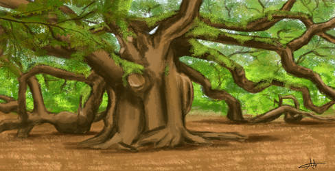 361 - Old Tree