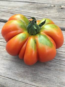 Costoluto Genovese Tomato