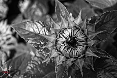 Crazy Flower by Attikus-Star
