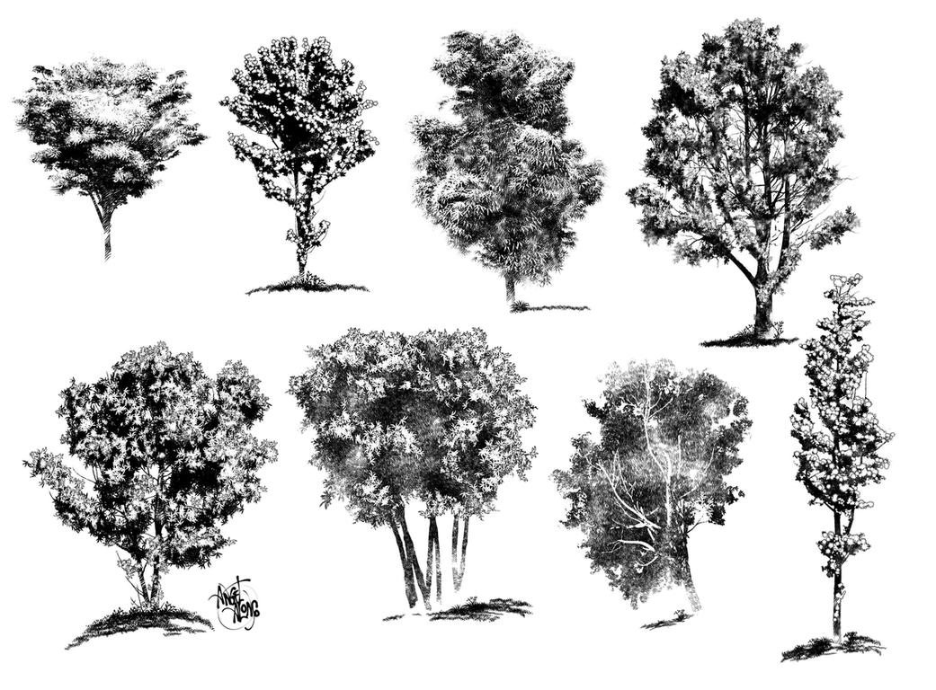 Tree Line Art Design : Ink drawings of trees by angelitoon on deviantart