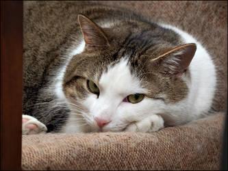 Grumpy Bookstore Cat #1