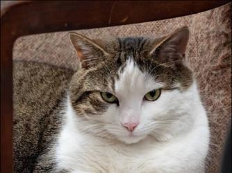 Grumpy Bookstore Cat #2