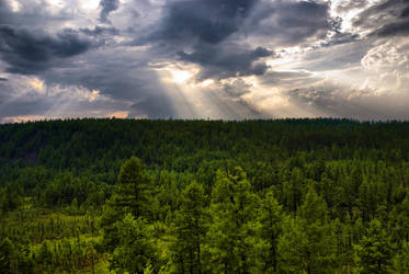 coniferous forest by sentinely
