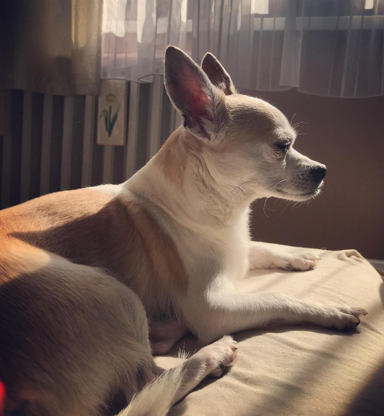 molly sun