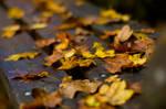 Autumn by iPingu