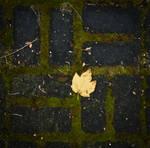 Leaf by iPingu