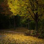 Autumn 3 by iPingu