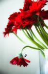 Flowers by iPingu