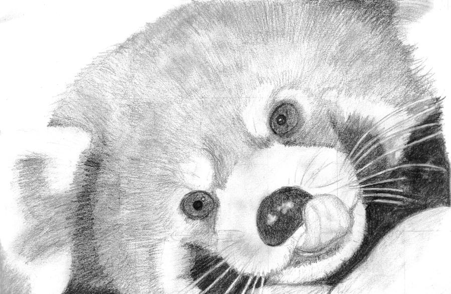 Red Panda Sketch by SuperDan2110 on DeviantArt