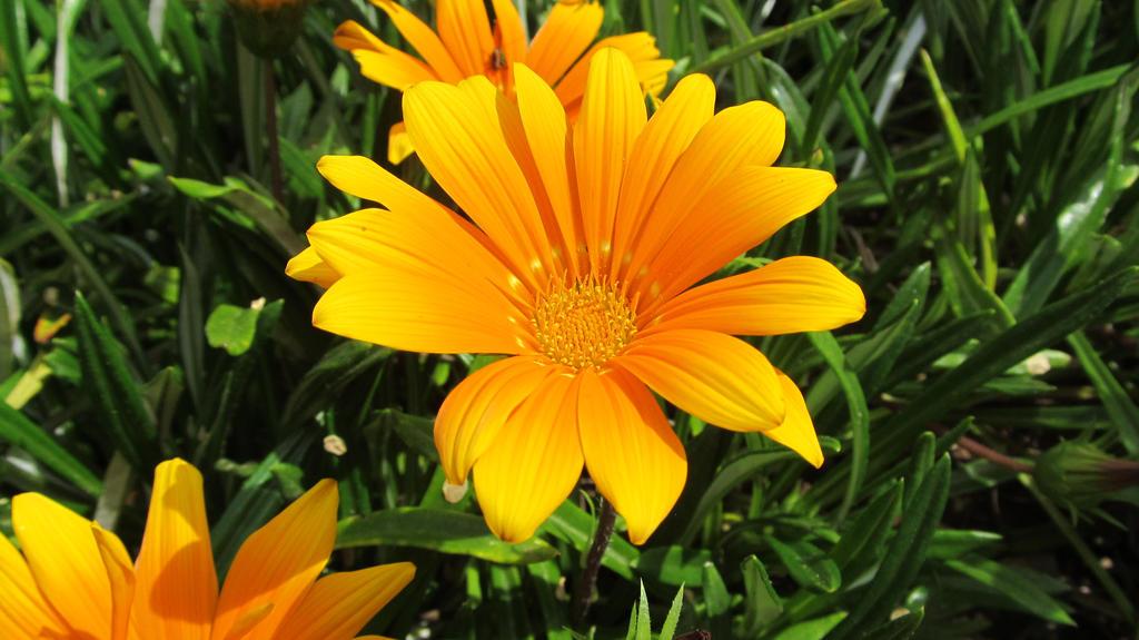 flower1 by solstiziodinverno