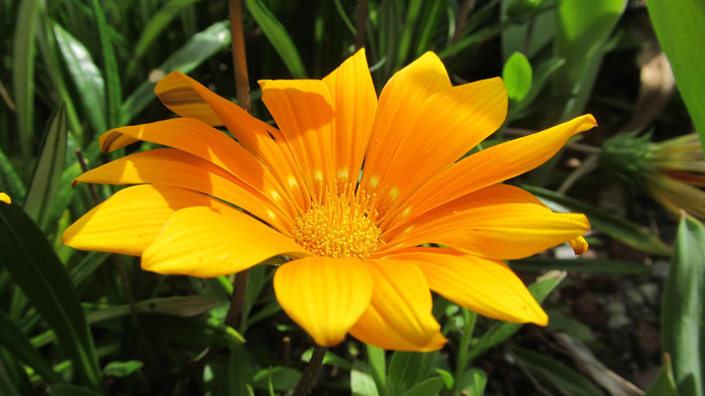 flower2 by solstiziodinverno
