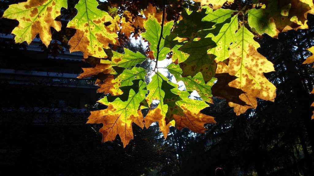 autumn leaf 3 by solstiziodinverno