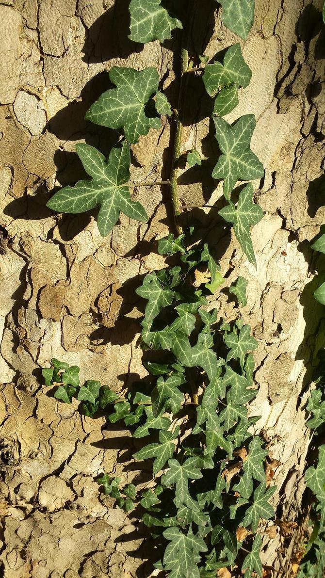autumn leaf 8 by solstiziodinverno