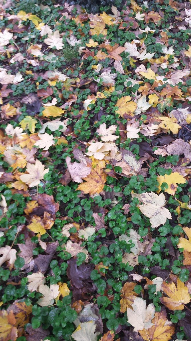 carpet by solstiziodinverno
