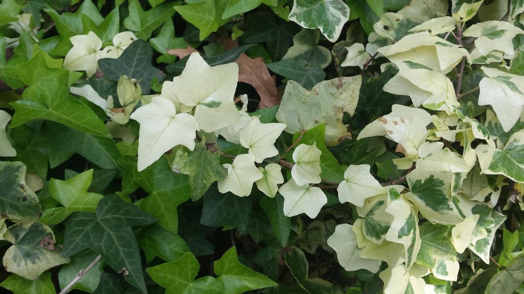 white leaf by solstiziodinverno