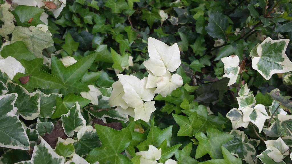 white leaf2 by solstiziodinverno
