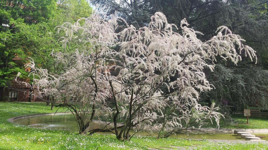 white tree by solstiziodinverno