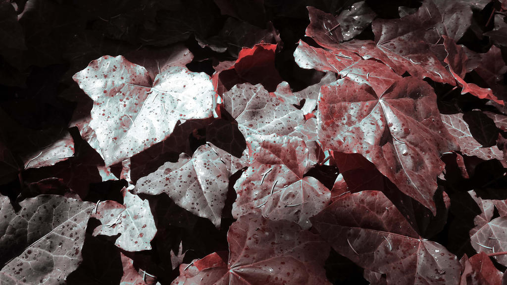 bloody leaves by solstiziodinverno