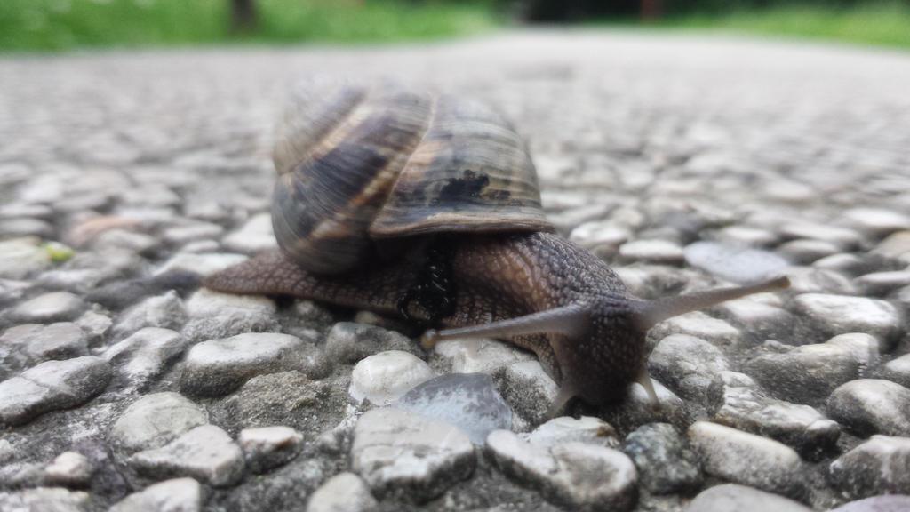 snail 1 by solstiziodinverno