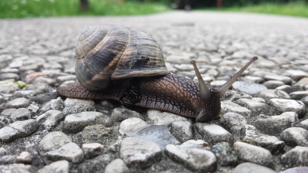 snail 2 by solstiziodinverno