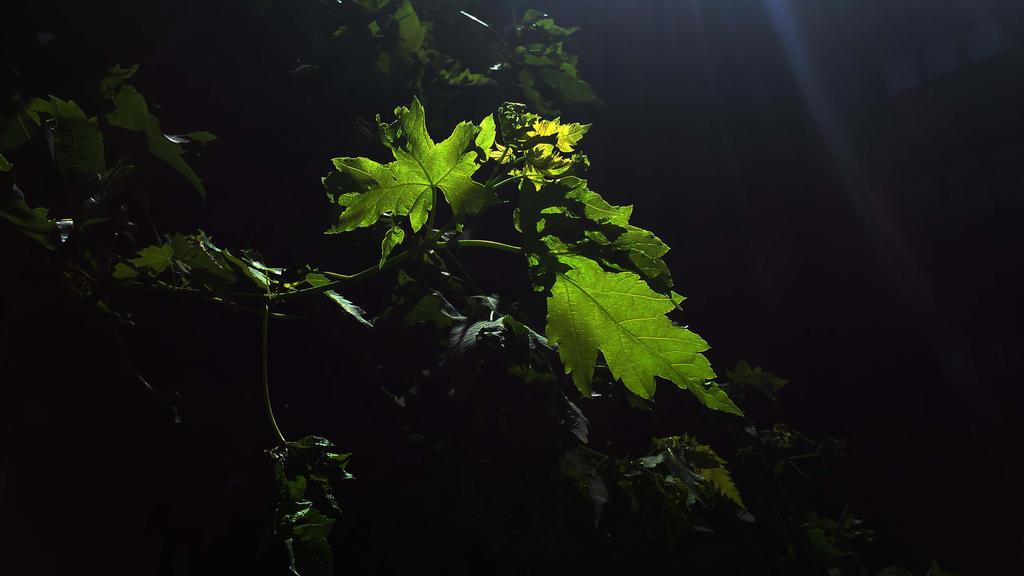 nocturn green by solstiziodinverno