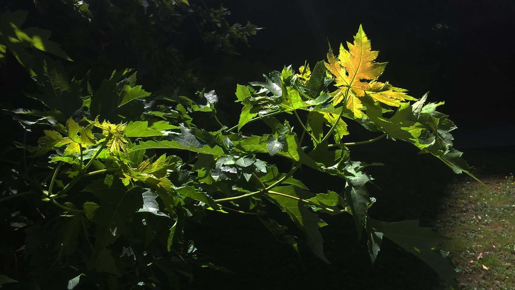 nocturn green 2 by solstiziodinverno