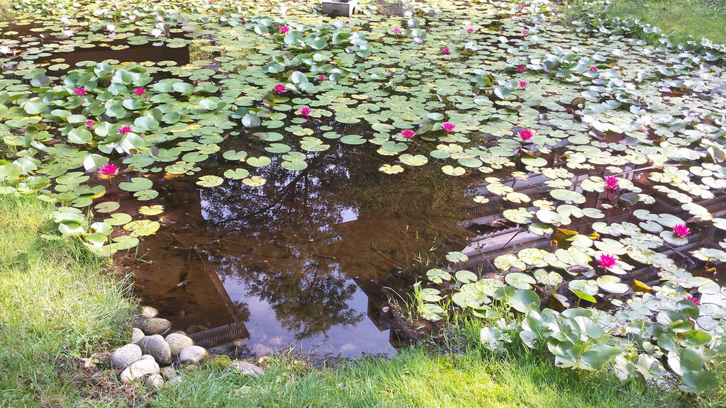 pond by solstiziodinverno