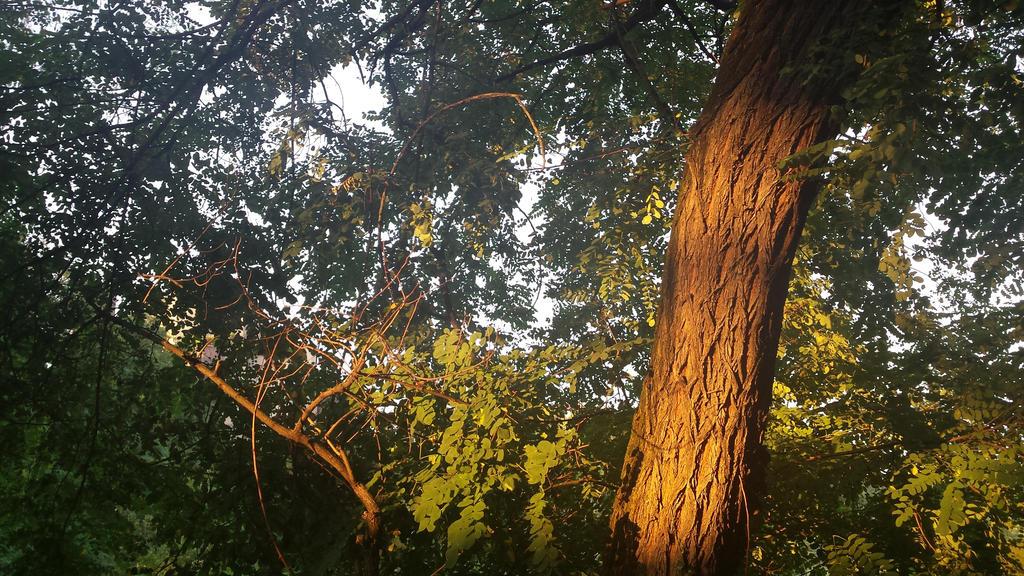 golden light by solstiziodinverno