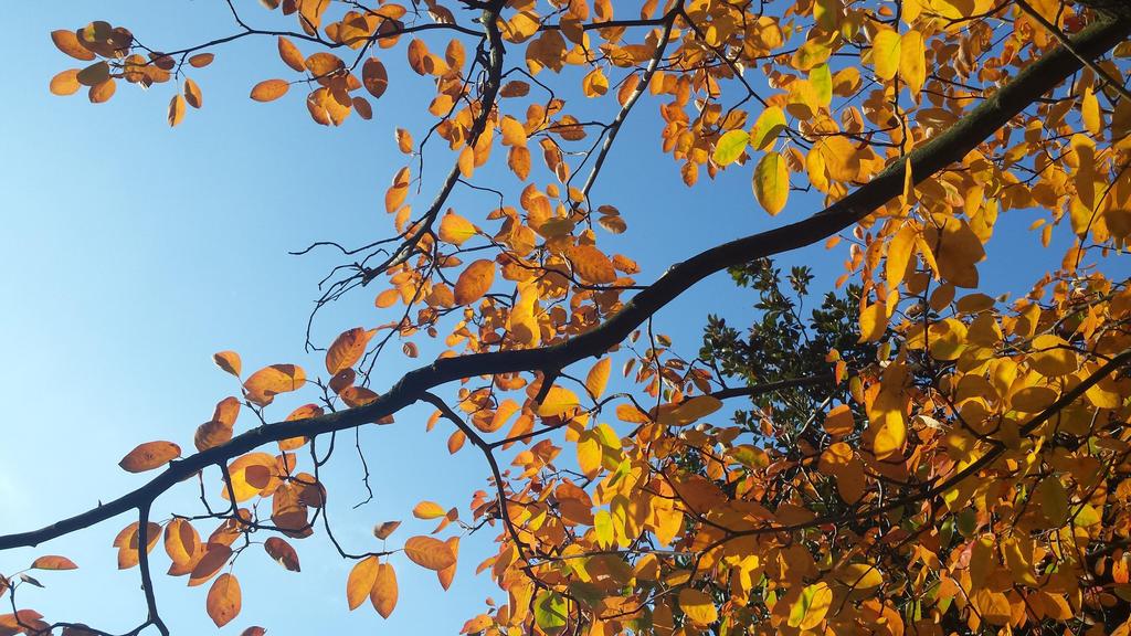 autumn leaf 11 by solstiziodinverno