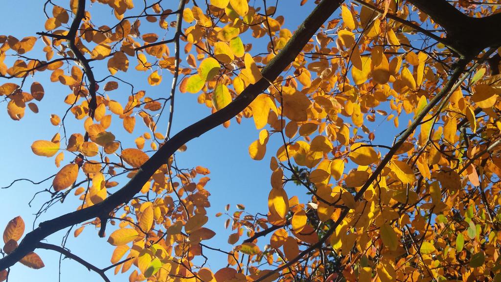 autumn leaf 12 by solstiziodinverno