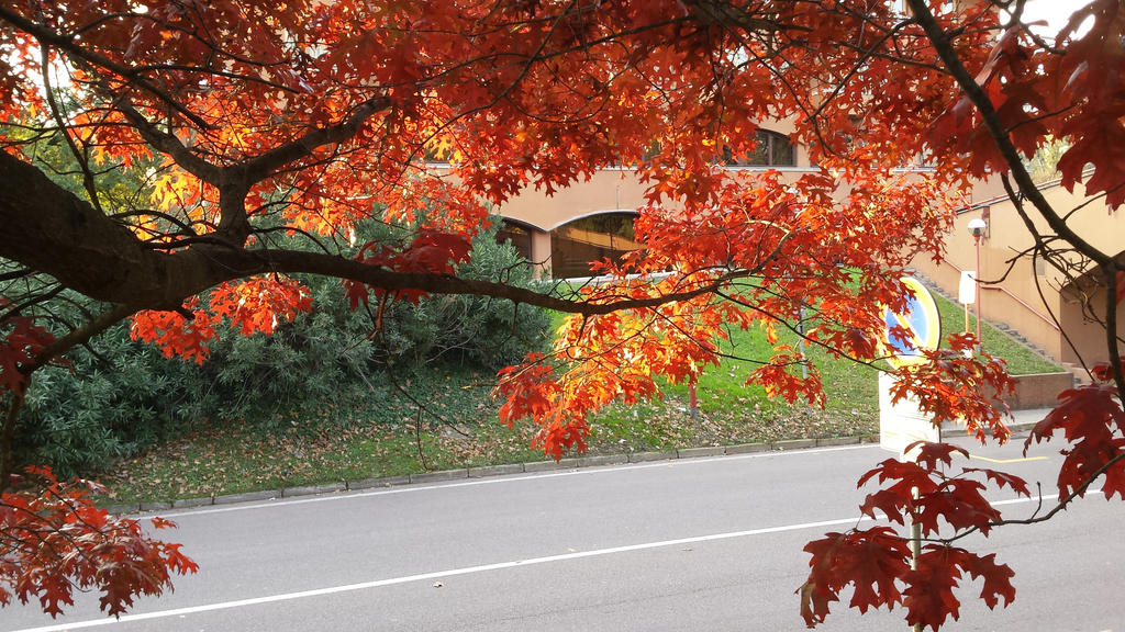 red tree 3 by solstiziodinverno