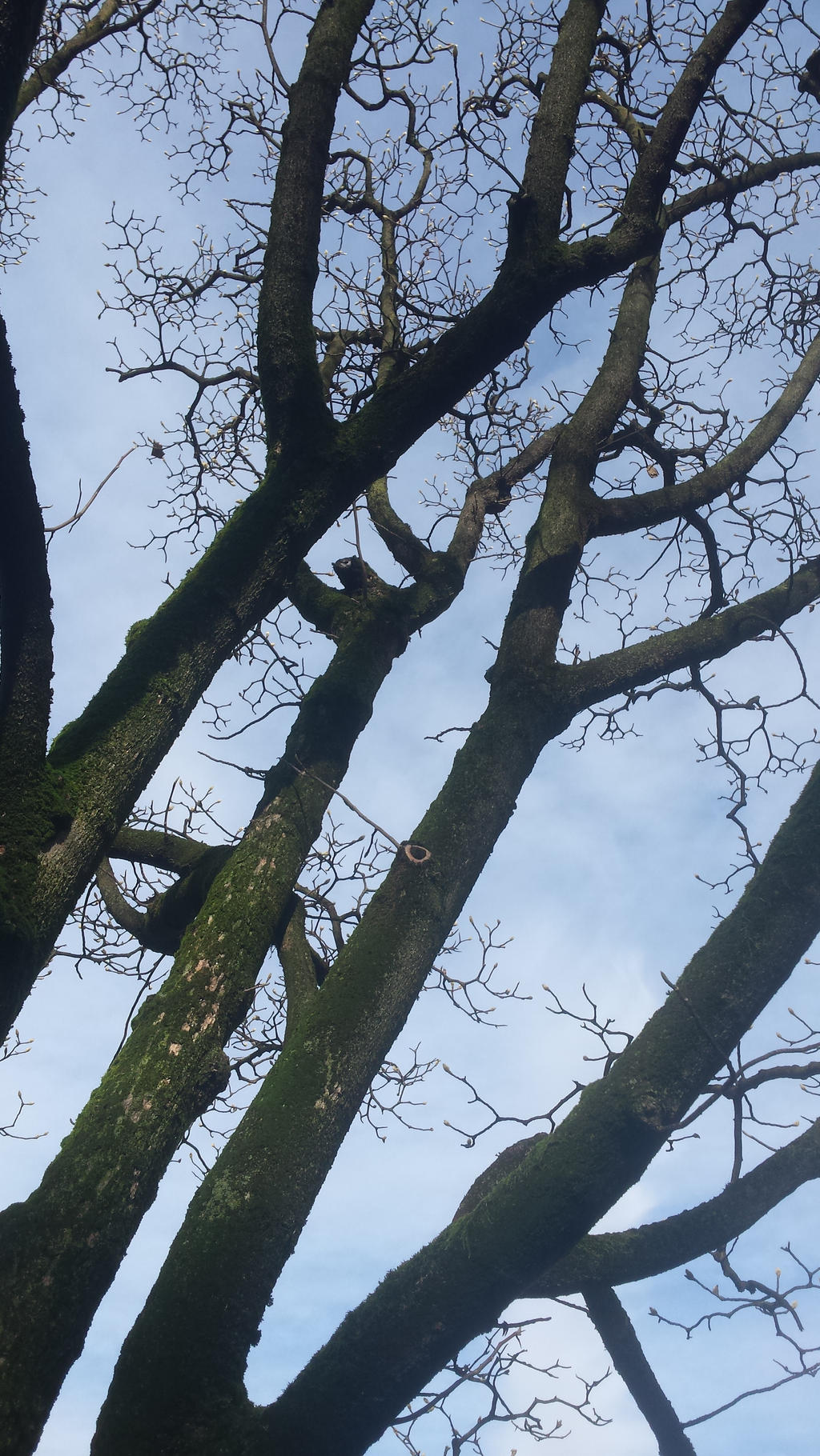 cielo sulla magnolia by solstiziodinverno